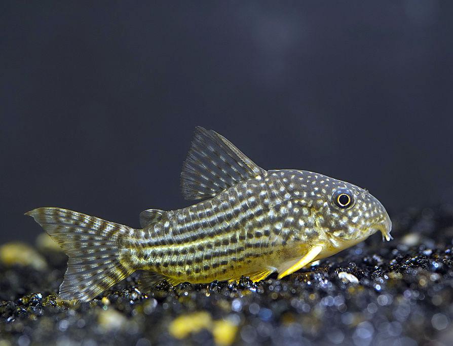 Wie man viele Fische deaktiviert