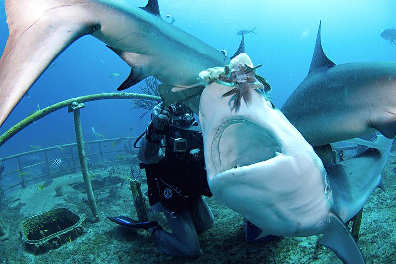 Miami Beach Shark Cage Diving